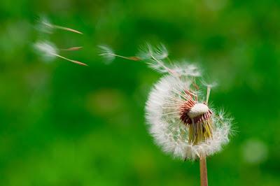 5 Ways to Beat Seasonal Allergies this Summer