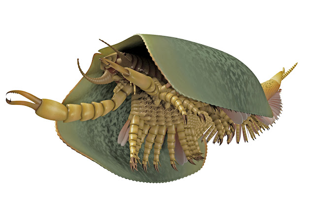 Paleontologists identify 508-million-year-old sea creature with can opener-like pincers