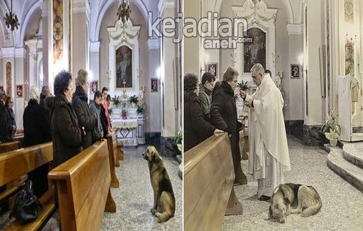 Anjing Herder yang selalu datang setiap hari ke gereja 13 Kisah Kesetiaan Anjing yang Dijamin Bikin Nangis
