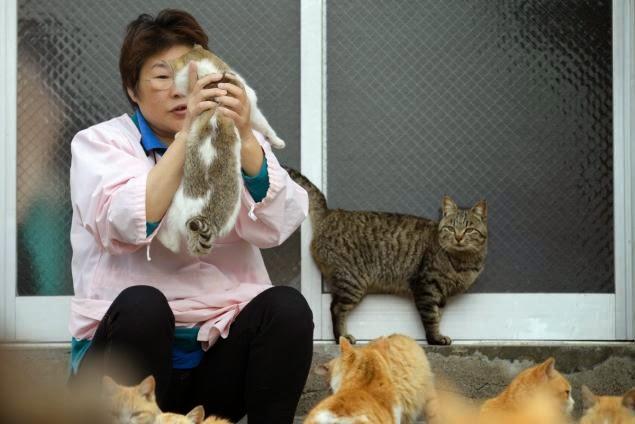 People in Cat Island Tashirojima Japan