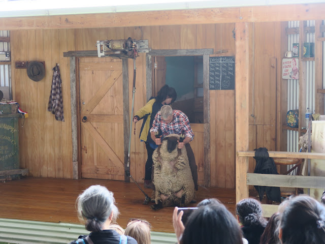 show at the shearing shed, Maru Koala and Animal Park, melbourne, australia
