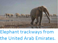 http://sciencythoughts.blogspot.co.uk/2012/02/elephant-trackways-from-united-arab.html