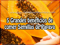 Salud y bienestar, 5 grandes beneficios de comer Semillas de Papaya