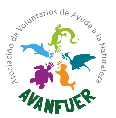 limpiar euro golondrina en Santa Cruz de Tenerife