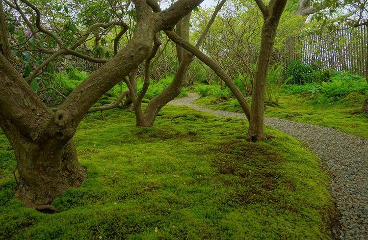 The Moss Garden creado bajo viejos rododendros (Rhododendron) y arándanos (Vaccinium corymbosum)