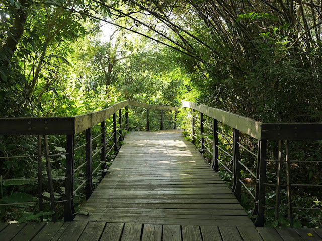 bamboo covered path at Zhishan Park in Taipei
