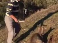 Turis China Tusuk Kangguru 18 Kali Saat Berada di Australia
