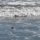 VIDEO: Sharks Spotted At Jetty Park In Cape Canaveral