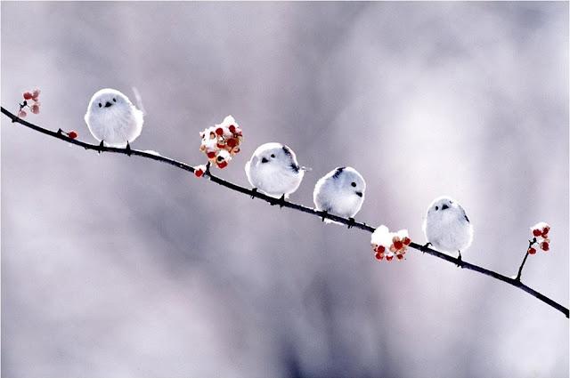 Doi dai 3 kieu nguoi nay, khong can phai giu ve mat on hoa