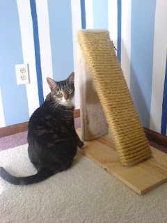 How to Train a Cat to Use a Scratching Post: Useful Tips