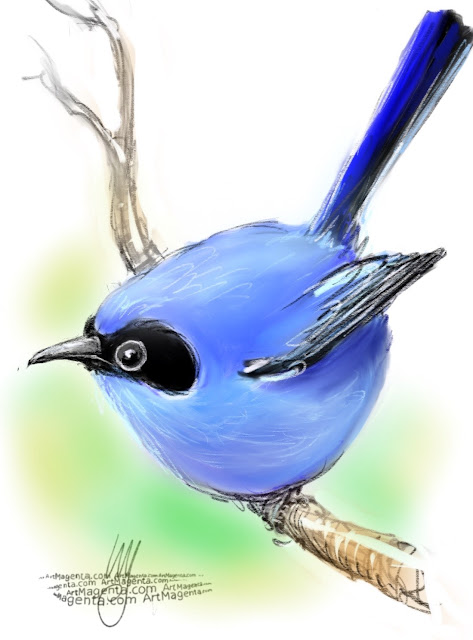 Masked gnatcatcher sketch painting. Bird art drawing by illustrator Artmagenta