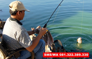 Essen Ikan Bawal Babon Galatama