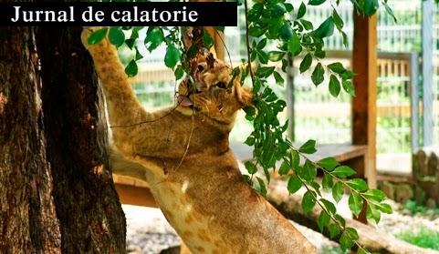 gradina-zoologica-Nyiregyhaza