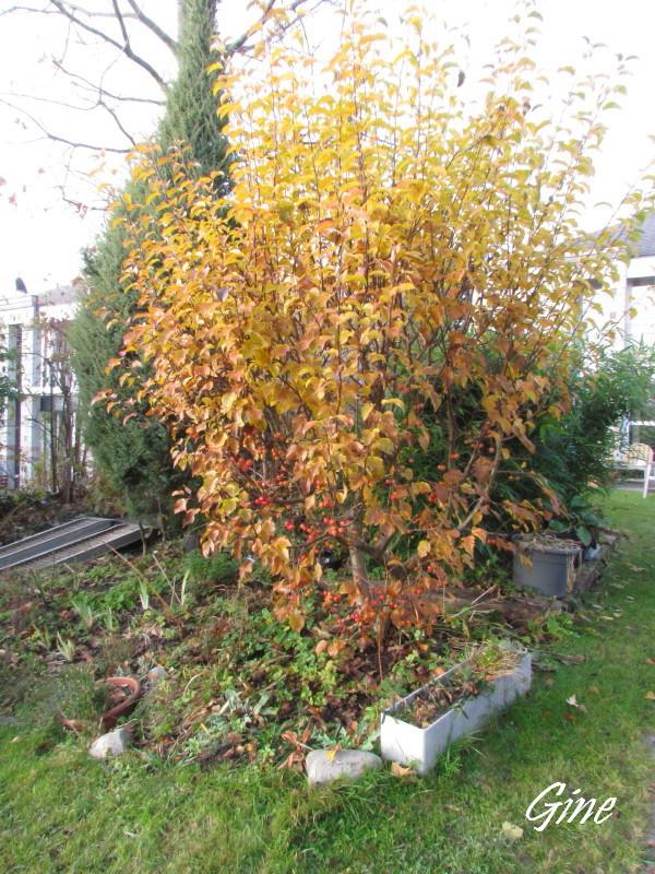 Au jardin de gine dimanche de novembre - Jardin novembre ...