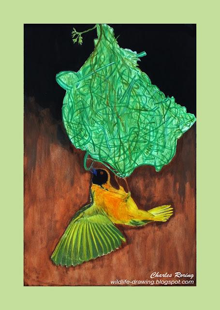 A bird was knitting a nest