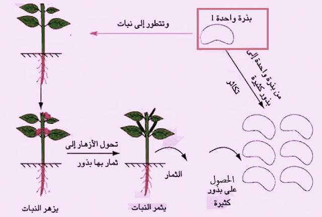 التكاثر فى الكائنات الحية - النبات