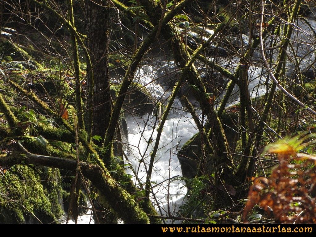 Senda de Bustavil, Tineo, PR AS-288: Río Castañar