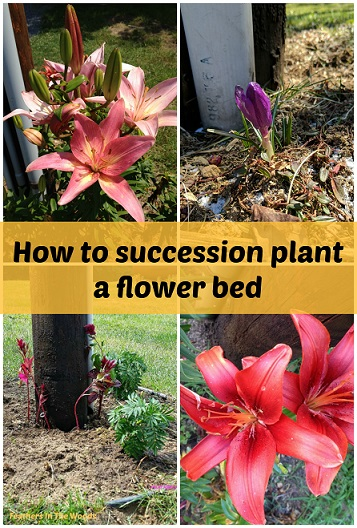 how to succession plant a flower bed feathers in the woods