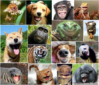 Xin đừng giết hại động vật: Tam độc