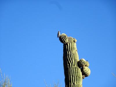 Tucson Mt. Park