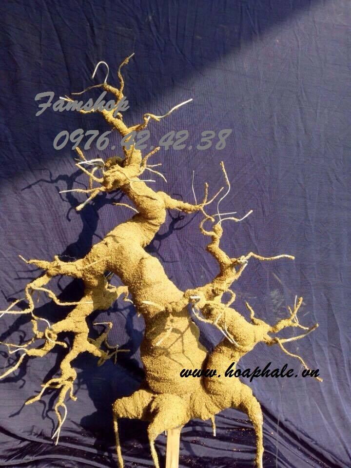Goc bonsai mai dao tai Duong Van Be