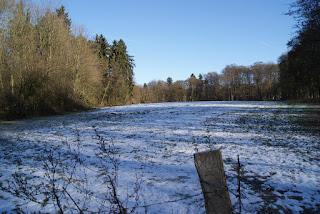 Auf einer eingezäunten Weide liegt Schnee