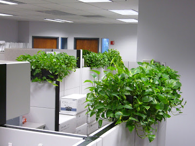 cây hút bức xạ máy tính