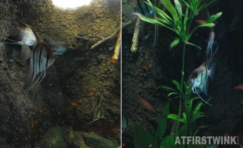 Osaka Aquarium Kaiyukan aquarium moonfish