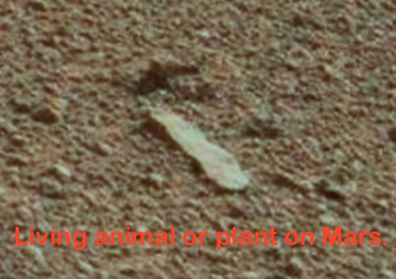 44e2ba26042534c3825bf485745e499f5421532c - El Mars Rover descubre rostro reptiliano petrificado en Marte