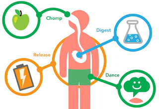 soal biologi metabolisme