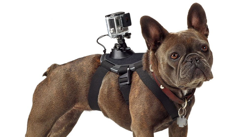 gopro attached strapped to dog gift for boyfriend lifestyle lookbook
