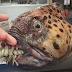 Un pescador de aguas profundas crea en Instagram una galería de 'monstruos marinos'