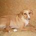 ΜΙΑ ΤΕΚΙΛΑ ΓΙΑ ΣΠΙΤΙ! Η χαριτωμένη σκυλίτσα δίνεται για υιοθεσία...