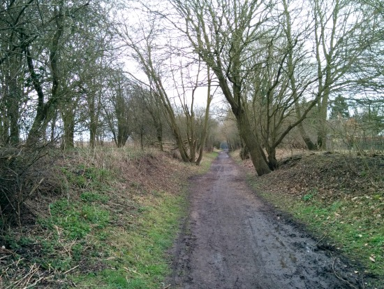 Photograph taken along the disused railway track on Walk 35: Letty Green Loop