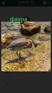 птица стоит в воде 23 уровень в игре 470 слов