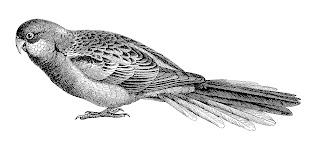 parrot bird digital download image