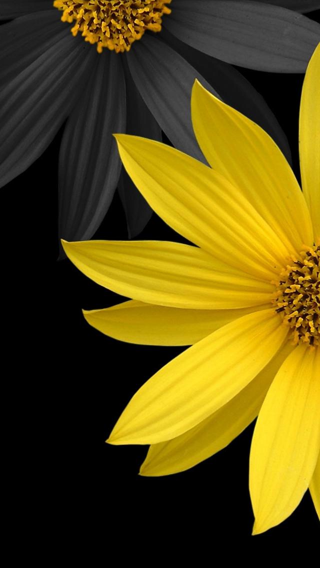 cute dark and yellow - photo #8