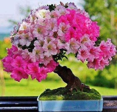 pink-flower-images