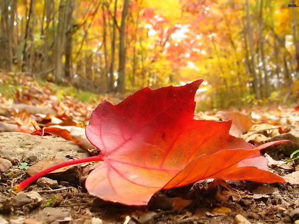 Autumn Season HD Wallpapers | Nice Wallpapers