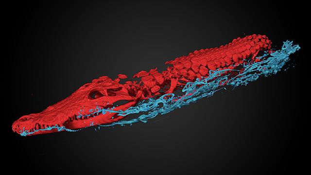 Egyptian giant crocodile mummy is full of surprises