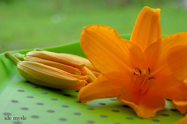 liliowiec ogrodowy, jadalne rośliny ogrodowe, jadalne kwiaty, pąki kwiatowe, daylily flowers, hemerocallis