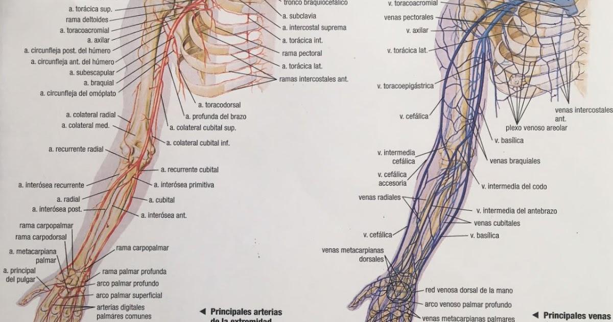 Anatomía Aplicada - Isabel González