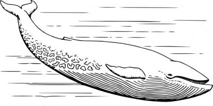 Know Your Media!: Underwater Ratios