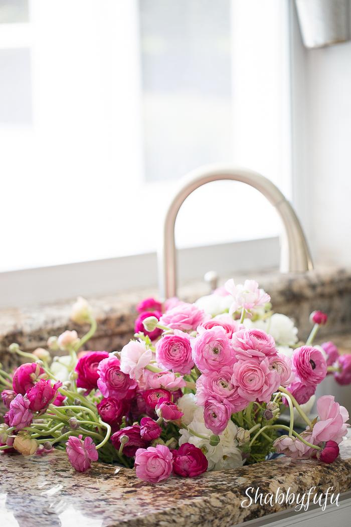 ranunculus-in-sink