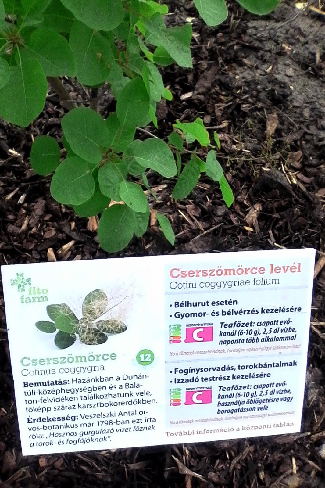 hogyan készül a moringa növény fogyni lyrics