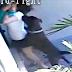 VÍDEO: Mulher protege seu filho de ataque de cachorros e fica gravemente ferida, assista