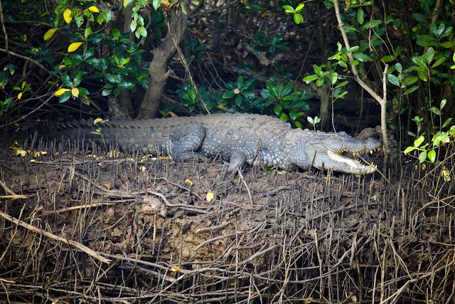 Cumbharjua crocodile trail - Cumbharjua & Divar Islands