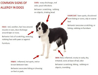 Symptoms of Dog Hair Loss and What to Look For