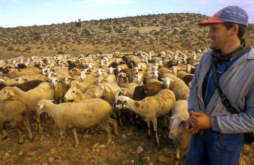 Activadas las ayudas al pastoreo orientado a la prevención de incendios forestales