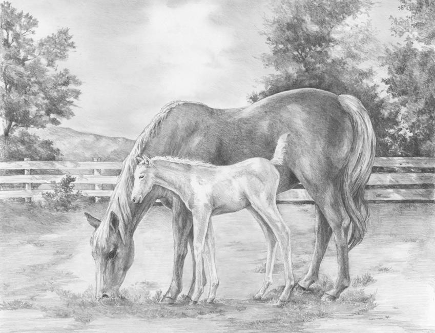Diane Wright Art Journal Horse Amp Colt